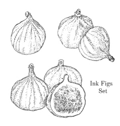 Ink figs sketches set vector