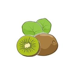 Kiwifruit isolated on white vector