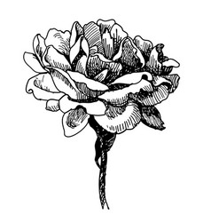 Rose flower doodle hand drawn vector
