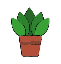 Potted plant flora decoration interior vector