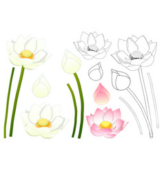 indian lotus outline vector image vector image