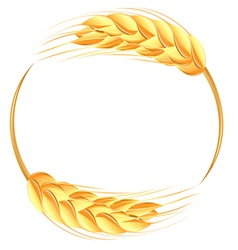 Wheat ears icon vector