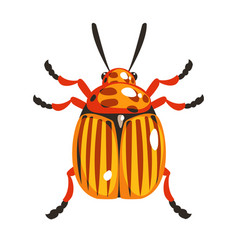 colorado potato beetle colorful cartoon character vector image