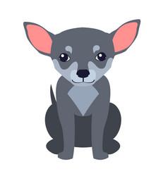 cute chihuahua dog cartoon flat icon vector image