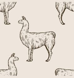 llama animal engraving vector image