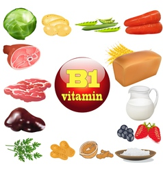 vitamin b one in plant and animal vector image