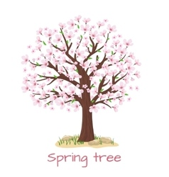 Spring blossom cherry tree vector image vector image