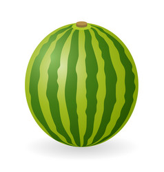 watermelon isolated vector image