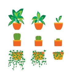 Green plants in pot for home or office vector