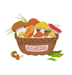 Busket full of wild mushrooms colorful cartoon vector