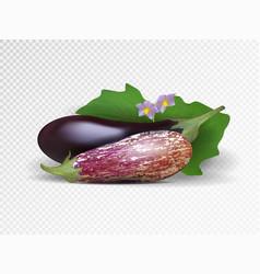 Photo-realistic fresh aubergine on a vector
