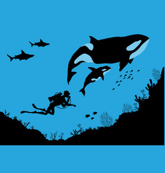 Underwater wildlife killer whales and divers vector