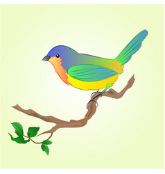 Bird on branch spring background vector