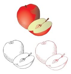 Apple drawing in different styles vector