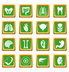 Human organs icons set green vector