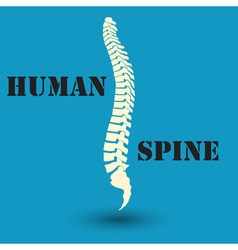 Silhouette of a human spine vector