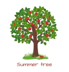 Green apple tree Summer tree vector image