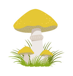 Slippery jack suillus luteus edible forest vector