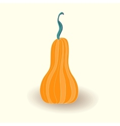 Card with pumpkin on white background vector image