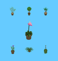 Isometric plant set of flower fern houseplant vector
