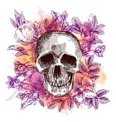 sketch the skull vector image vector image
