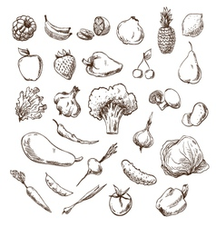 Vegetables and fruits drawing vector