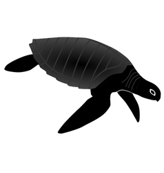 olive turtle vector image