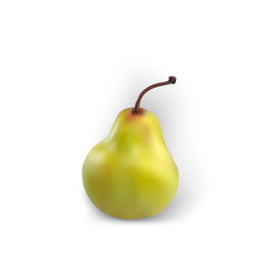 Pear isolated realistic white background green vector