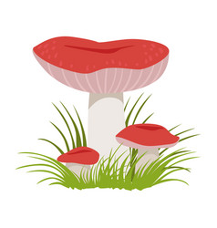 Russula xerampelina edible forest mushrooms vector