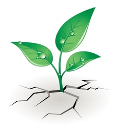 Growth sprout vector