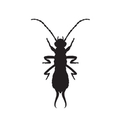 silhouette Forficula auricularia Earwig vector image