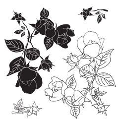 Four black and white roses vector image