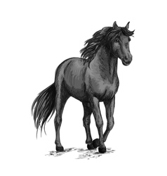Horse walking in slow gait sketch portrait vector image
