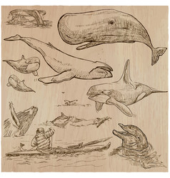 Cetaceans cetacea - an hand drawn pack sketching vector
