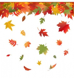 Falling leaves vector
