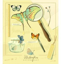 Butterflies entomology vector