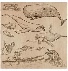 cetaceans cetacea - an hand drawn pack sketching vector image vector image