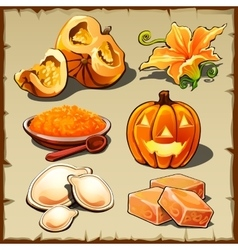 Set of pumpkin cereals seeds and other food vector