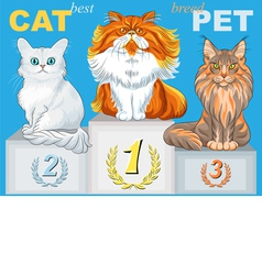 Fluffy cat champion of different breeds on the pod vector