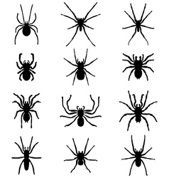 Spiders vector