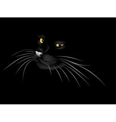 Black cat in the dark3 vector image vector image
