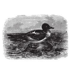 Cape fulmar vintage vector