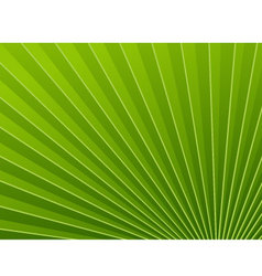 Green wallpapers palm tree vector image vector image