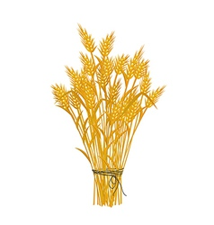 Golden wheat icon vector