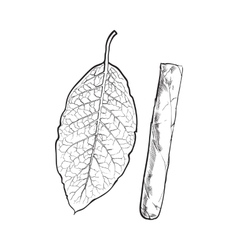 Unlabelled unlit brown Caribbean Cuban cigar vector image
