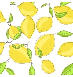 Yellow lemon fruits with leaf on branch white vector