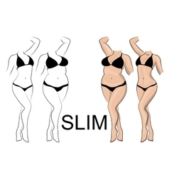 Slimness and weight loss vector
