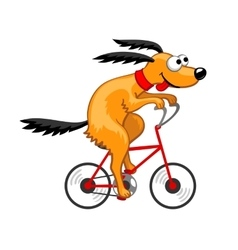 Dog rides a bicycle vector