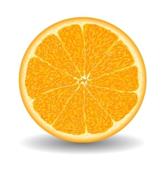 Oranges slice over white vector