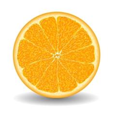 oranges slice over white vector image
